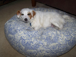 Drs Foster And Smith Dog Bed Reviews